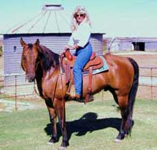 Claytons-Wood-Dust ~ Dun Quarter Horse Stallion Son of Romeo Blue with 3 crosses to Blue Valentine and 4 crosses to Driftwood