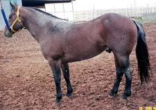 Trace Of Glen ~ Red Roan Hancock - Driftwood Bred Stud