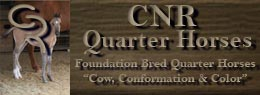 Cow, Conformation & Color ~ We raise blue roans, duns, buckskins and gray foundation bred quarter horses with the bloodlines of Joe Hancock, Blue Valentine, Driftwood & Sugar Bars in West Texas.